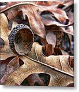 Autumn Acorn And Oak Leaves Metal Print by Jennie Marie Schell