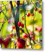 Autumn Berries  Metal Print by Stelios Kleanthous