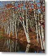 Autumn Blue Metal Print by Karol Livote