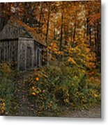 Autumn Canopy Metal Print by Robin-lee Vieira