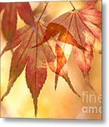 Autumn Glow Metal Print by Anne Gilbert