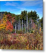 Autumn In The Adirondacks Metal Print by David Patterson