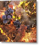 Autumn In The Vineyard Metal Print by Michele Steffey