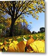 Autumn Landscape Metal Print by Elena Elisseeva