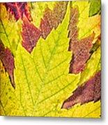 Autumn Maple Leaves Metal Print by Adam Romanowicz