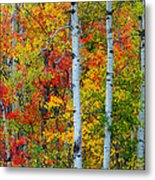Autumn Palette Metal Print by Mary Amerman
