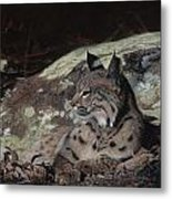 Autumn Rest Metal Print by Pat Gilmore
