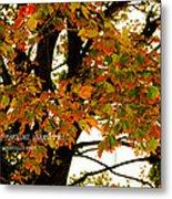 Autumn Smile Metal Print by Jaime Lind