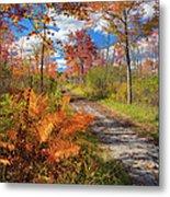 Autumn Splendor Metal Print by Bill Wakeley