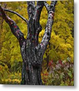 Autumn Trees3 Metal Print by Vladimir Kholostykh
