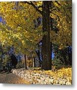 Autumn Wall - Fm000082 Metal Print by Daniel Dempster