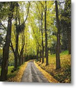 Autumns Day Metal Print by Kim Andelkovic