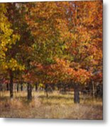 Autumn's Miracle Metal Print by Jeff Swanson