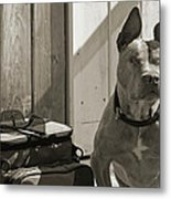 Avery Metal Print by Cindi Ressler