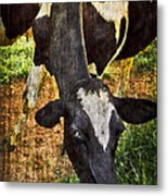 Awww Shucks Metal Print by Debra and Dave Vanderlaan
