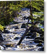 Babbling Brook Metal Print by Bill Cannon