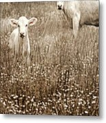 Babe Of Mine Metal Print by Steven  Michael