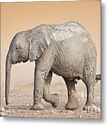 Baby Elephant  Metal Print by Johan Swanepoel