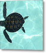Baby Sea Turtle Metal Print by Ellen Henneke