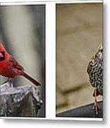 Backyard Bird Series Metal Print by Heather Applegate
