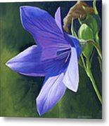 Balloon Flower Metal Print by Alecia Underhill