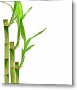 Bamboo Stems In Black Vase Metal Print by Olivier Le Queinec