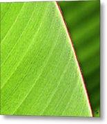 Banana Leaf Metal Print by Heiko Koehrer-Wagner
