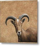 Barbary Ram Metal Print by James W Johnson