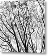 Bare Metal Print by Wendy J St Christopher