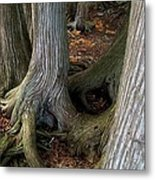 Barky Barky Trees Metal Print by Michelle Calkins