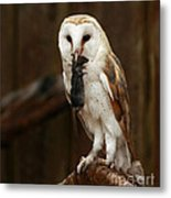 Barn Owl With Catch Of The Day Metal Print by Inspired Nature Photography Fine Art Photography