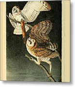 Barn Owls Metal Print by Philip Ralley