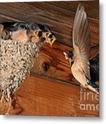 Barn Swallow Nest Metal Print by Scott Linstead