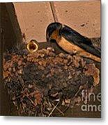 Barn Swallow Metal Print by Ron Sanford
