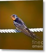 Barn Swallow Metal Print by Todd Bielby