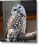 Barred Owl 264 Metal Print by Joyce StJames