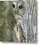 Barred Owl Peek A Boo Metal Print by Jennie Marie Schell