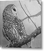 Barred Owl Metal Print by Tim Dangaran