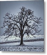 Barren Winter Scene With Tree Metal Print by Dan Friend