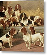 Basset Hounds In A Kennel Metal Print by VT Garland