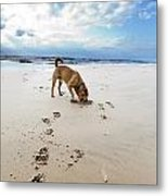 Beach Dog Metal Print by Eldad Carin
