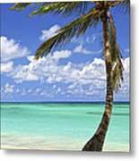 Beach Of A Tropical Island Metal Print by Elena Elisseeva