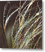 Beads Of Water On Sea Grass Metal Print by Artist and Photographer Laura Wrede