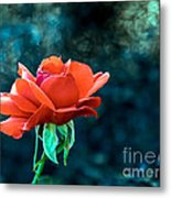 Beautiful Red Rose Metal Print by Robert Bales