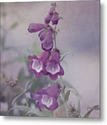 Beauty In Purple Metal Print by Kim Hojnacki