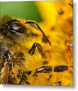 Bee At Work Metal Print by Tin Lung Chao