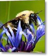Bee On A Blue Flower Metal Print by Matt Dobson