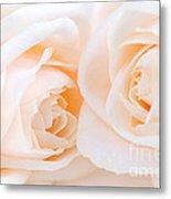 Beige Roses Metal Print by Elena Elisseeva