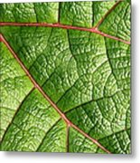 Big Green Leaf 5d22460 Metal Print by Wingsdomain Art and Photography