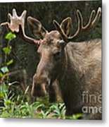 Big Guy Metal Print by Rick  Monyahan